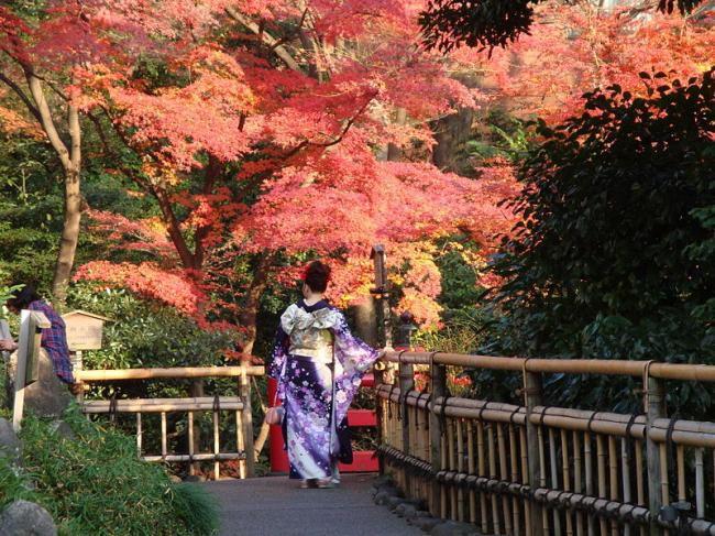 Kết quả hình ảnh cho Tokyo - điểm đến hấp dẫn du khách