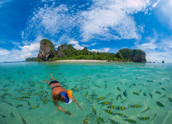Chiêm ngưỡng những đàn cá ở biển Krabi